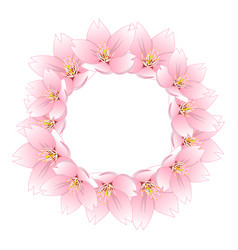 sakura cherry blossom wreath vector image
