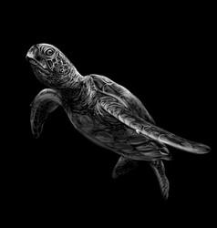 sea turtle realistic artistic black and white vector image