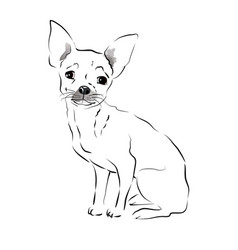 small dog vector image vector image