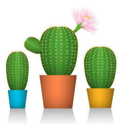 Cactuses in pots three plants in colorful vector