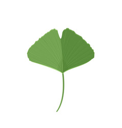 Ginkgo leaf isolated on white background vector