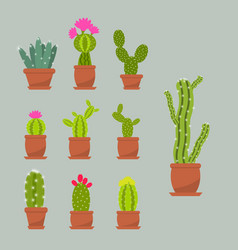 home succulent plants cactus in ceramic pots vector image