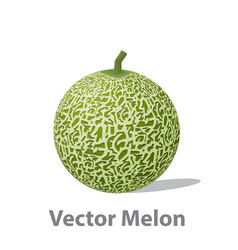 Realistic melon ball isolated on white vector