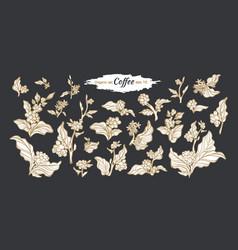 set coffee branch black vector image