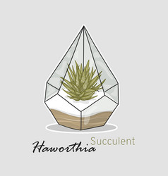 succulent haworthia hand drawing linear style vector image