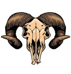 goat head skull vector image