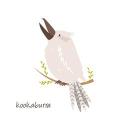 a cute australian kookaburra bird animal character vector image