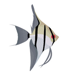 Angelfish cartoon aquarium fish vector