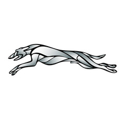 Lineart silhouette of running dog whippet breed vector