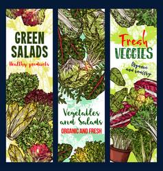 salads vegetables sketch banners vector image