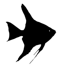 Scalare fish vector