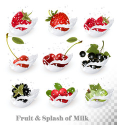 Big collection of fruit and berries in a milk vector