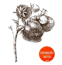 Hand drawn strawberry vector image vector image