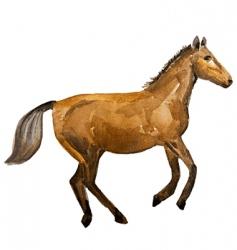 watercolor horse vector image
