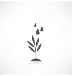watering of grass water drops icon vector image