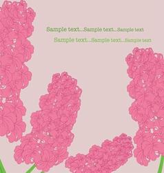 Pink hyacinth vector image vector image