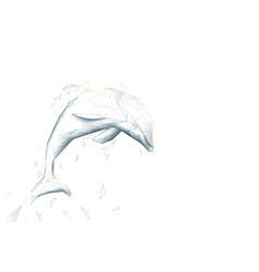 Dolphin jumping low poly geometric wire vector