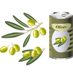 Green olive branch and bank of olives vector