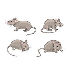 Grey mice vector
