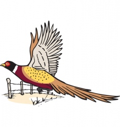 Pheasant in flight vector