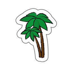 Trees palms isolated icon vector