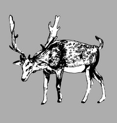 deer hand drawn ink isolated vector image