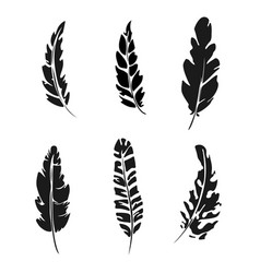 Feather set black silhouette feather vector