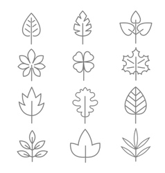 Leaf thin line icons vector