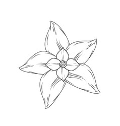 Line chamomile flower with petals to organic vector