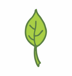 single leaf freehand vector image
