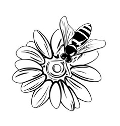 bee on flower isolated on white vector image
