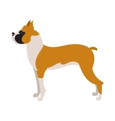 Boxer dog breed vector image