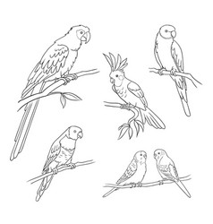 different parrots in outlines vector image