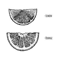 Lemon and orange wedges vector