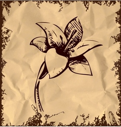 Lily flower isolated on vintage background vector image