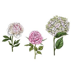 set with peony rose and phlox flowers vector image vector image