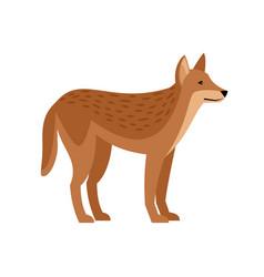 Exotic wild dog vector