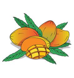 Isolate ripe mango fruit vector