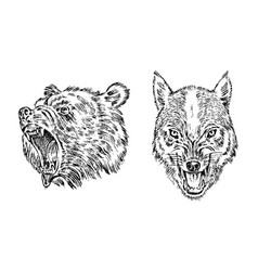portrait grizzly bear face forest vector image