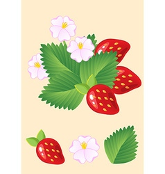 Ripe juicy red strawberries isolated with leaves vector image