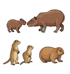 set 2 rodents vector image