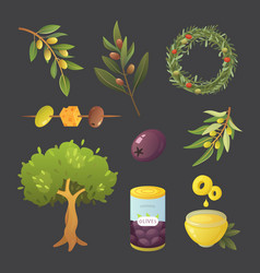 set olives fruit olive oil bottle branch tree vector image