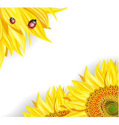 Sunflower Background with Ladybugs vector image
