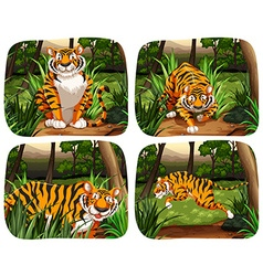 Tiger living in the jungle vector image