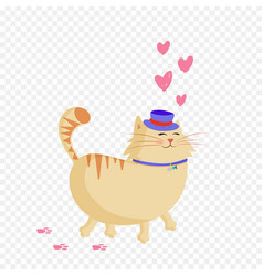 valentines cat in love on transparent background vector image