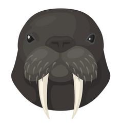 Walrus icon arctic sea animal wildlife vector