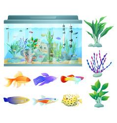 Aquarium in glass container vector