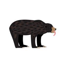 brown wild bear vector image