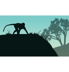 Silhouette of one monkey in hills vector
