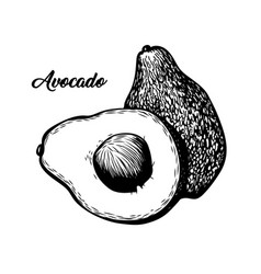 Avocado slice hand drawn vector